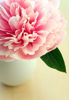 Peonies are the imperial flower of China, representing dignity, wealth, and glory.