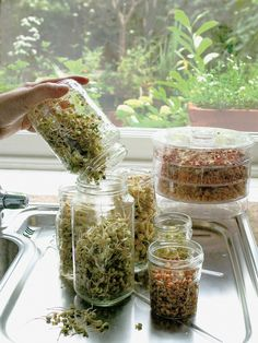 HOW TO SPROUT SEEDS Many kinds of beans and seeds are available for sprouting, providing a range of interesting flavors and textures. All sprouting seeds will grow in jars or tiered sprouters, which allow several crops to be grown at once.
