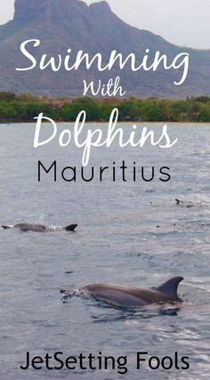 We had heard that dolphins on Mauritius were often be spotted in the deep bay off the beaches of Tamarin, a town just to the south of Flic en Flac. We had considered taking the long walk to search them out, but then we heard of something better: a boat tour that included swimming with dolphins on Mauritius.
