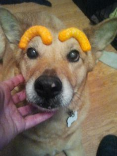 Peanut with Cheetos Eyebrows.