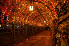 Night lights in a red autumn tunnel lamps and by behindmyblueeyes, $4.00
