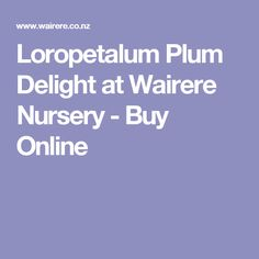 Loropetalum Plum Delight at Wairere Nursery - Buy Online