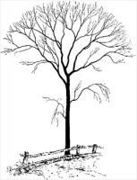 bare-tree-by-fence.jpg (153×200)