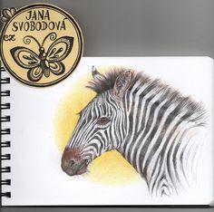 Zebra by mumuku.deviantart.com on @DeviantArt