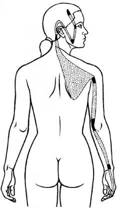Small Intestine sinew channel #lymphmassage #lymph #massage #pressure #points Meridian Acupuncture, Acupuncture Points, Acupressure Points, Reflexology Points, Lymphatic Drainage Massage, Acupressure Treatment, Reflexology Massage, Traditional Chinese Medicine, Alternative Medicine