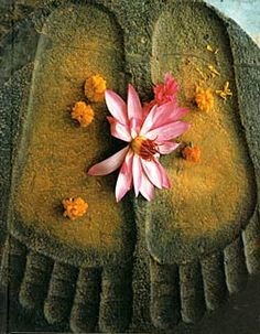 buddhabe:  in the footsteps of the Buddha