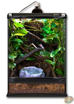 12x12x18 Zoo Med Terrarium. DIY this terrarium with Hydroballs, Forest Floor Substrate, and various sticks and plants of your choosing.