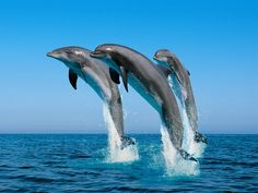 Dolphins are my favorite sea creatures.
