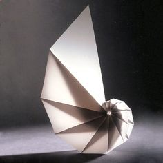 Origami, Aesthetics and Natural History: Concentric Circles