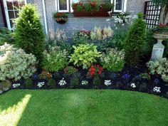 peonies landscaping ideas | Aruncus Aethusifolius at either side of the Aucuba Variegata, the ...