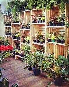 Bom dia! Lindo é o verde o colorido das plantas e a simplicidade delas. Floricultura na Ferreira Costa da Tamarineira. #flor #caixotes #flores #plantas #verde #cor #colorido #vida #arquitetura #floricultura #life #sustentáveis #sustentabilidade #ideia #arte #decoraçao #decor #jardim #jardinagem by arteearquitetura http://ift.tt/22sOIDg