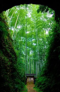 Owase Bamboo Forest