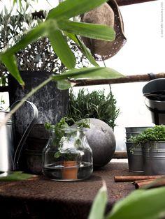 Fyll växthuset med glädje! | Livet Hemma – IKEA