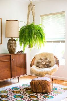 Boston Fern. Great hanging plant and can give some serious visual impact to a… Green Indoor plants Tropical Boho Bohemian Relax Nature Hippy Bold Paint Styling Interior Design Home Botanical