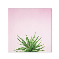 'Succulent Simplicity I on Pink' Photographic Print on Wrapped Canvas