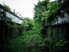 glassforest a-compendium-of-abandoned-greenhouses