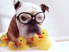 I don't care how many ducks you stick in this tub, I still don't want a bath.