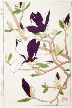 ✨ Kawarazaki Shodo, Japanese - Magnolia Branch, ca. 1950, Color wood block print on cream wove paper, 55 x 44 cm