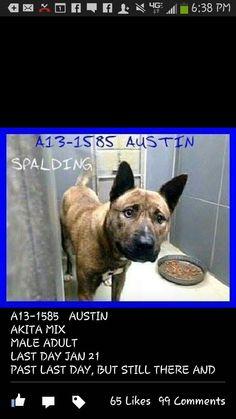 PLEASE HELP @risingdove SAVE AUSTIN  - http://YouCaring.com http://www.youcaring.com/other/help-for-austin-/144417… pic.twitter.com/3WG4N7OpdB