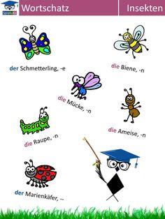 """Deutsch lernen: Wortschatz """"Insekten"""""""