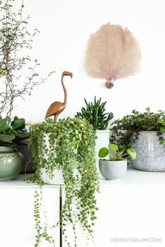 heimatbaum - wild & schön Urban Jungle Bloggers, Plants, Green Home, Sideboard, Ikea Besta, Boho, Scandi, Flamingo, Teak, Hay Wooden Hand