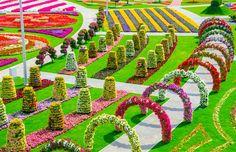 Неверојатна цветна градина во Дубаи која ќе ве остави без здив
