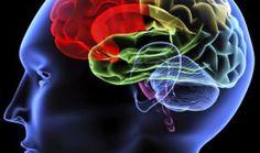 ¿Qué sucede en el cerebro momentos antes de morir? - Salud