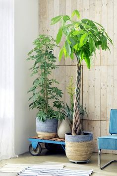 Lovely indoor plants for coastal living style