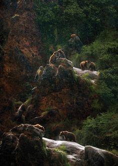 Oso - Parque de la Naturaleza de Cabárceno #Cabarceno #Cantabria #Spain