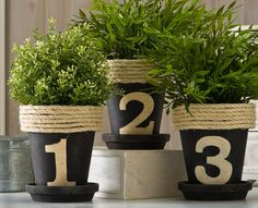 These flowerpots are perfect for an herb garden or small plants.