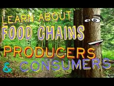 Watch a fun science lesson for kids about producers, consumers, and food chains…. Watch a fun science lesson for kids about producers, consumers, and food chains. Learn what makes a producer so different than a consumer and how they fit in… Fourth Grade Science, Middle School Science, Elementary Science, Science Classroom, Teaching Science, Science Education, Physical Science, Teaching Ideas, Science Videos