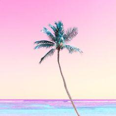 Matt crump photography iphone wallpaper pastel palm tree sunset tropical be Tropical Wallpaper, Beach Wallpaper, Summer Wallpaper, Trendy Wallpaper, Cute Wallpapers, Pastel Wallpaper, Iphone Wallpapers, Palm Tree Background, Pastel Background