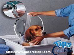 TIPS CREDIFIEL te dice unos tips si quieres tener un dinero extra en estas próximas vacaciones contrátate como cuidador y bañador de mascotas. Los adultos que trabajan largas horas pueden necesitar a alguien que lleve a bañar a su perro durante el día. http://www.credifiel.com.mx/