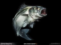 We wanted to share these images by Danish artist, Tommy Kinnerup, who created these fantastic fish illustrations for fishing tackle brand, Savage Gear. Bass Fishing Pictures, Savage, Fish Icon, Monster Fishing, Marine Conservation, Sea Bass, Mundo Animal, Fish Art, Wildlife Art