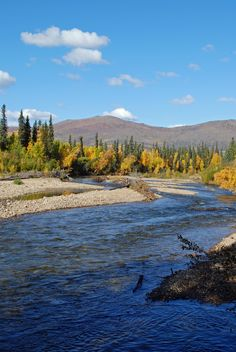 Chena River near Fairbanks, #Alaska // #Travel