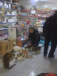 For animal people. Pass it on. Shopkeeper in Turkey opens his shop to house stray cats during the winter.