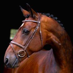 This horse makes my heart flutter, I swear. (Bridle: Hööks Wilford Claridge House®)