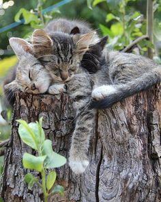 "bestofkittens: "" #cat #cats #catsagram #catstagram #pet #pets #animal #pets #animal #animals #petstagram #petsagram #photooftheday #catsofinstagram #ilovemycat #instagramcats #nature #catoftheday #lovecats #furry #picpets #picoftheday #catlover..."