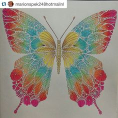 "Rainbow butterfly from Millie Marotta's ""Tropical World"" Rainbow Butterfly, Butterfly Flowers, Butterflies, Enchanted Forest Coloring Book, Meditation Art, Doodle Patterns, Patterns In Nature, Coloring Book Pages, Adult Coloring"