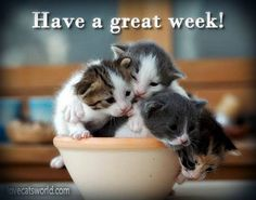 Image result for great week images kitties