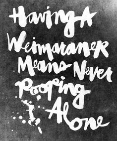 Having a Weimaraner...hahahahaha - so true.  this is sooooo true.  Actually there is never anything you do alone.