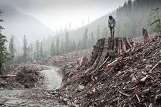 98% of the old growth forests are gone. 99% of of the prairies are gone. 80% of the rivers on this planet do not support life anymore. We are out of species, we are out soil, and we are out of time. And what we are being told by most of the environmental movement is that the way to stop all of this is through personal consumer choices. It's time for a real strategy that can win.     http://deepgreenresistance.org
