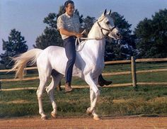 MORAFIC #32261 (Nazeer x Mabrouka, by Sid Abouhom) 1956-1974 grey stallion bred by the EAO; imported to the US 1965 by Douglas Marshall/ Gleannloch Farms. Sired 168 registered purebreds in the US.