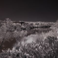 Bill Gracey posted a photo:  This was taken soon after the unusually heavy rains that saturated Southern California. It's not often we see this much water in our local river. Photographed from San Diego River Walk Trail between Lakeside and Santee.  This is an infrared image taken with my converted Nikon D300 camera. I've been taking infrared photographs for more than 13 years, and with a total of 3 different cameras. It's much easier to take infrared images digitally that it was in the film…