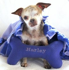 Puppy-Mill Survivors Teddy and Harley Are on a Rescue Mission | Dogster