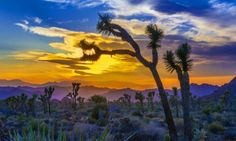 Joshua Tree National Park Is The Most Beautiful Place In California