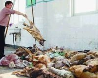 STOP Cruelty to animals in China