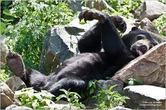Lazy Sunday Afternoon Bear (Beer voor Pampus), via Flickr.