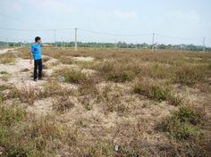 Nâng cao hiệu lực, hiệu quả quản lý nhà nước về đất đai   QUẢN LÍ ĐẤT ĐAI /  BỘ TNMT - BAN KINH TẾ - TẠP CHÍ CS