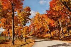 Fall Foliage in New England(especially, Vermont, New Hampshire, Main where I have not been there yet... )